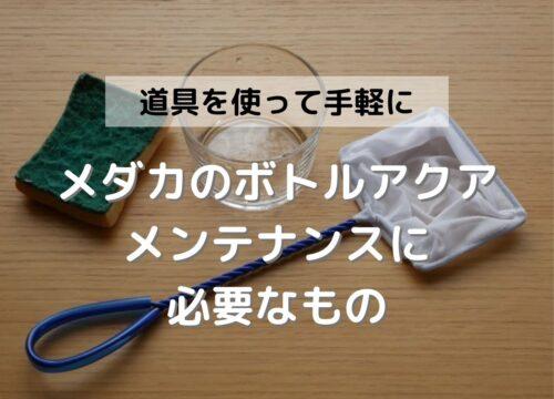 メダカをビンで飼育する際の手入れ(水換え・掃除)に便利な6つの準備物
