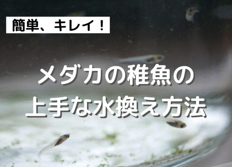 メダカの稚魚のビンの水換え方法。稚魚に優しいやり方と必要なグッズ